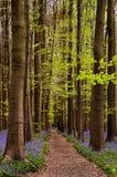Camino de bosque Imagenes de archivo