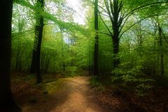 Camino de bosque Fotografía de archivo