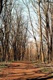 Camino de bosque Fotos de archivo