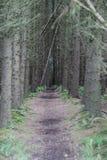 Camino de bosque Fotos de archivo libres de regalías