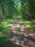 Camino de bosque asoleado Fotos de archivo libres de regalías