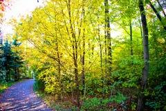 Camino de bosque de la caída fotografía de archivo libre de regalías