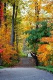 Camino de bosque de la caída imagenes de archivo