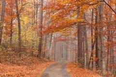 Camino de bosque de la haya Imágenes de archivo libres de regalías