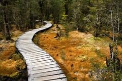 Camino de bosque del enrollamiento imagenes de archivo