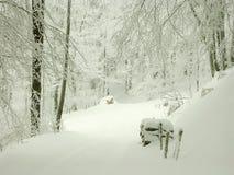 Camino de bosque del invierno con la niebla a través de los árboles Fotografía de archivo libre de regalías