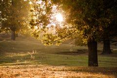 Camino de bosque del otoño Imagenes de archivo