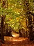 Camino de bosque del oto?o imagen de archivo