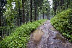 Camino de bosque después de la lluvia imagenes de archivo