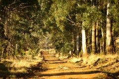 Camino de campo Imagen de archivo libre de regalías