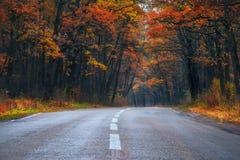 Camino de doblez en el bosque del otoño Imagen de archivo libre de regalías