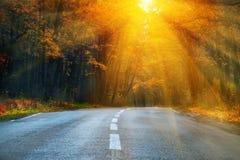 Camino de doblez en el bosque del otoño Fotografía de archivo