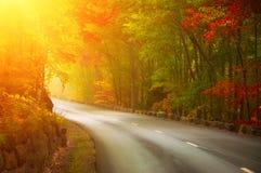 Camino de doblez en el bosque soleado del otoño Imagen de archivo