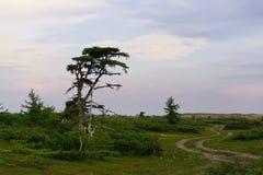Camino de enrollamiento en paisaje de la tundra del bosque imagen de archivo libre de regalías