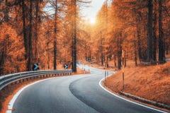 Camino de enrrollamiento hermoso de la montaña en bosque del otoño en la puesta del sol imagen de archivo libre de regalías