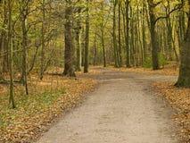 Camino de Forrest Imagen de archivo