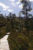 Camino de Forrest Fotografía de archivo