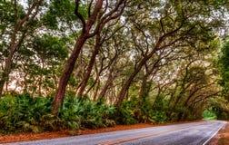 Camino de KLined del árbol de roble vivo Imagen de archivo libre de regalías