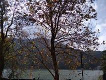 Camino de la alameda cerca del lago en Nainital Uttarakhand la India imagen de archivo libre de regalías