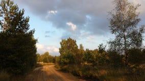 Camino de la arena en el bosque Imagen de archivo