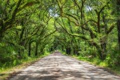 Camino de la bahía de la botánica en Carolina del Sur imagen de archivo libre de regalías