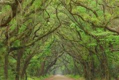 Camino de la bahía de la botánica, Charleston, Carolina del Sur imagen de archivo libre de regalías