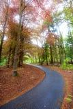 Camino de la bici del enrollamiento Imagen de archivo libre de regalías