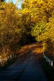 Camino de la caída Imagen de archivo libre de regalías