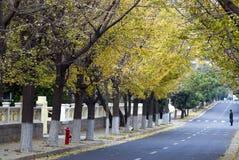 Camino de la caída del otoño de la ciudad Fotos de archivo