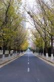 Camino de la caída del otoño del último otoño Fotografía de archivo