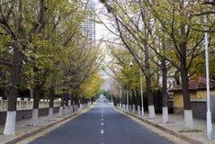 Camino de la caída del otoño en la ciudad de China Fotos de archivo libres de regalías