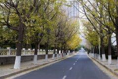 Camino de la caída del otoño en la ciudad del último otoño Fotos de archivo