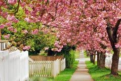 Camino de la cereza imagenes de archivo