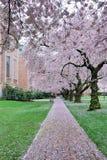 Camino de la cereza Imágenes de archivo libres de regalías