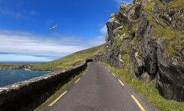 Camino de la costa de la sola pista el al frente de Slea en la península de la cañada, Irlanda foto de archivo libre de regalías