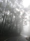 Camino de la curva en la niebla Imágenes de archivo libres de regalías