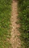 Camino de la frontera de la suciedad y de la hierba Fotografía de archivo libre de regalías