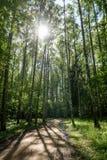 camino de la grava en bosque del árbol de abedul Imagen de archivo