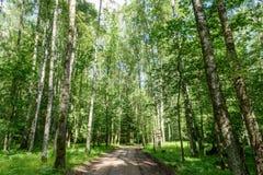 camino de la grava en bosque del árbol de abedul Imagenes de archivo