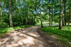 camino de la grava en bosque del árbol de abedul Fotos de archivo libres de regalías