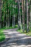 camino de la grava en bosque del árbol de abedul Fotografía de archivo