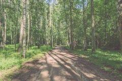 camino de la grava en el bosque del árbol de abedul - mirada de la película del vintage Imagen de archivo