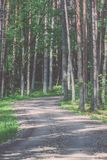 camino de la grava en el bosque del árbol de abedul - mirada de la película del vintage Fotografía de archivo