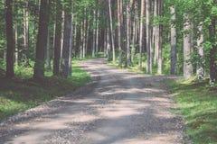 camino de la grava en el bosque del árbol de abedul - mirada de la película del vintage Foto de archivo libre de regalías