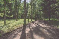 camino de la grava en el bosque del árbol de abedul - mirada de la película del vintage Imágenes de archivo libres de regalías