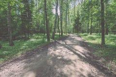 camino de la grava en el bosque del árbol de abedul - mirada de la película del vintage Fotos de archivo