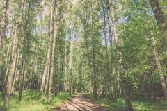 camino de la grava en el bosque del árbol de abedul - mirada de la película del vintage Imagen de archivo libre de regalías