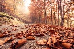 Camino de la haya del otoño fotos de archivo libres de regalías