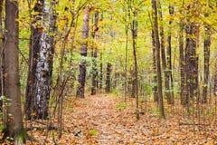 Camino de la litera de la hoja en bosque del otoño Imagen de archivo