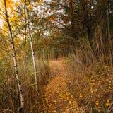Camino de la manera de la trayectoria en Autumn Forest Foto de archivo